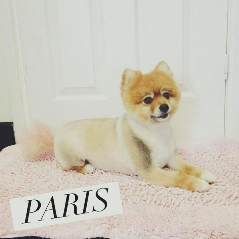 Dog Groomers in St Helens - Doggy Styles Dog Grooming Parlour
